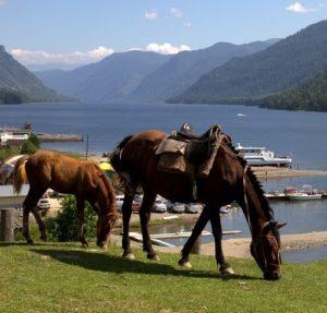 Алтай из Омска: экскурсии и туры